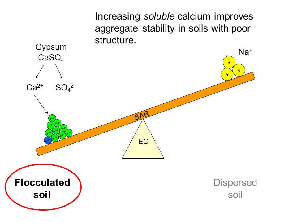 Na + SAR EC Increasing soluble calcium improves aggregate stability in soils with poor structure. Flocculated soil Dispersed soil + + + Ca 2+ ++ Gypsu
