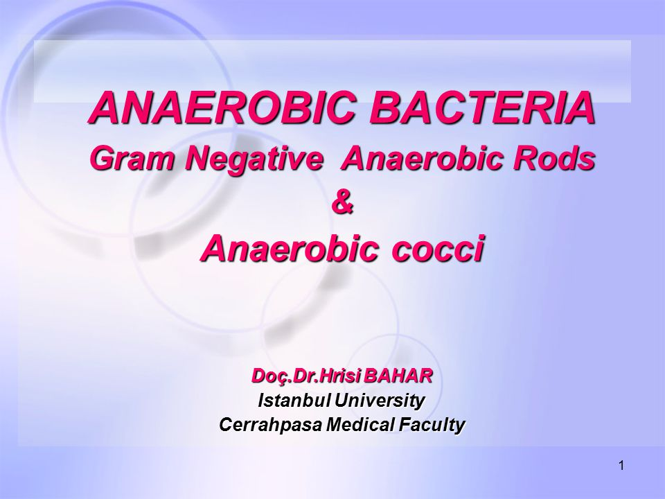 1 ANAEROBIC BACTERIA Gram Negative Anaerobic Rods & Anaerobic cocci Doç.Dr.Hrisi BAHAR Istanbul University Cerrahpasa Medical Faculty