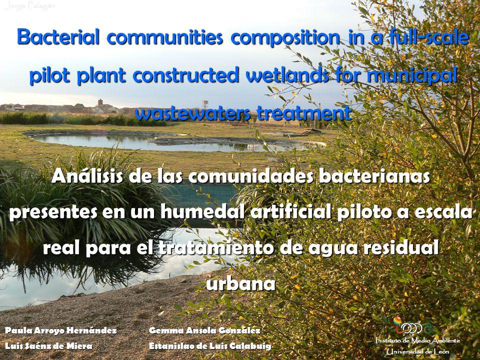 Bacterial communities 1.ENVIRONMENTAL SAMPLES 2. EXTRACTED NUCLEID ACIDS 3.