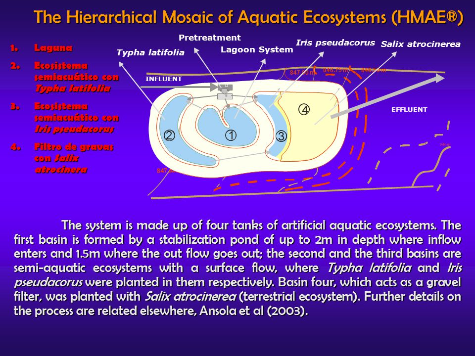 The Hierarchical Mosaic of Aquatic Ecosystems (HMAE®) The system is made up of four tanks of artificial aquatic ecosystems.