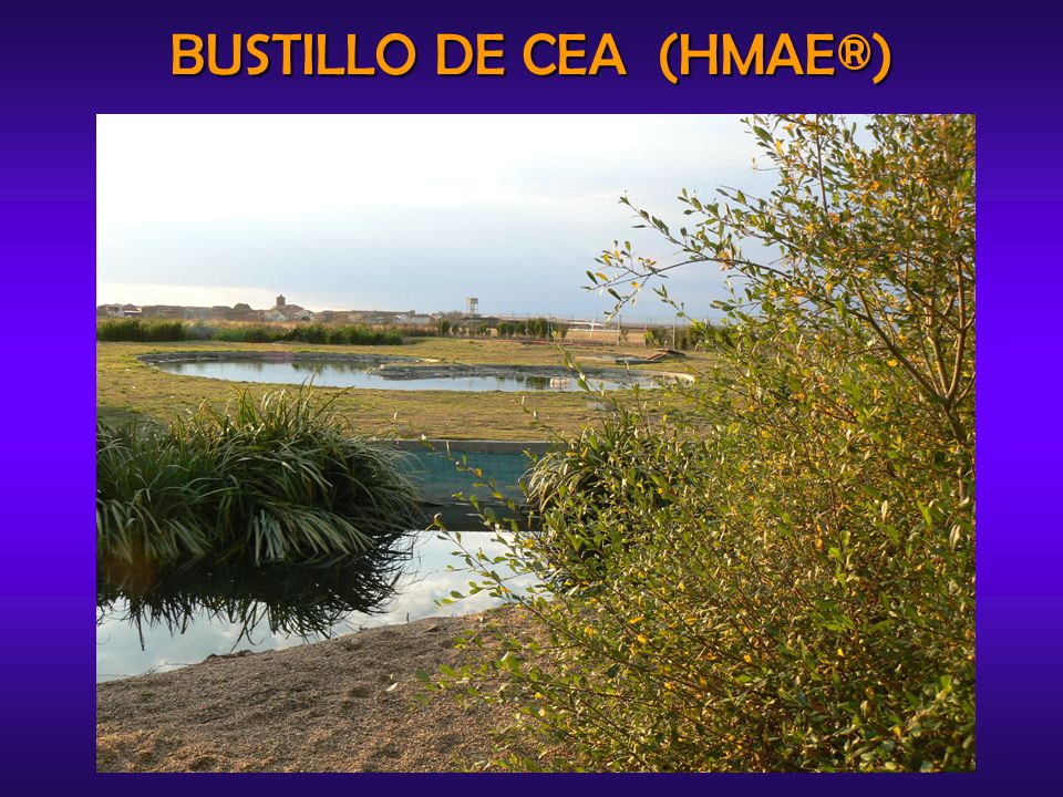 SAMPLE COLLECTION Wastewater samples were collected aseptically from the different ecosystems of the HMAE ® in Bustillo de Cea, once in a month.