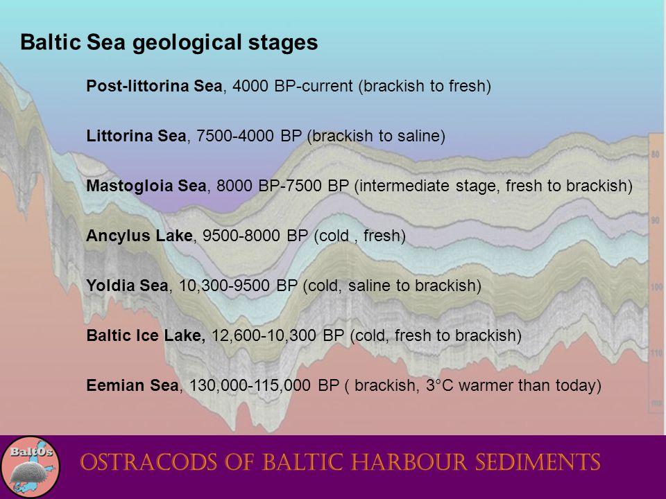 Baltic Sea geological stages Post-littorina Sea, 4000 BP-current (brackish to fresh) Littorina Sea, 7500-4000 BP (brackish to saline) Mastogloia Sea, 8000 BP-7500 BP (intermediate stage, fresh to brackish) Ancylus Lake, 9500-8000 BP (cold, fresh) Yoldia Sea, 10,300-9500 BP (cold, saline to brackish) Baltic Ice Lake, 12,600-10,300 BP (cold, fresh to brackish) Eemian Sea, 130,000-115,000 BP ( brackish, 3°C warmer than today)