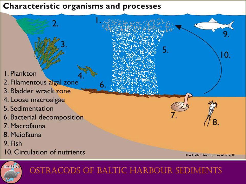 The Baltic Sea Furman et al 2004