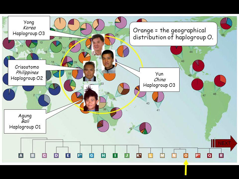 yDNA Haplogroup O