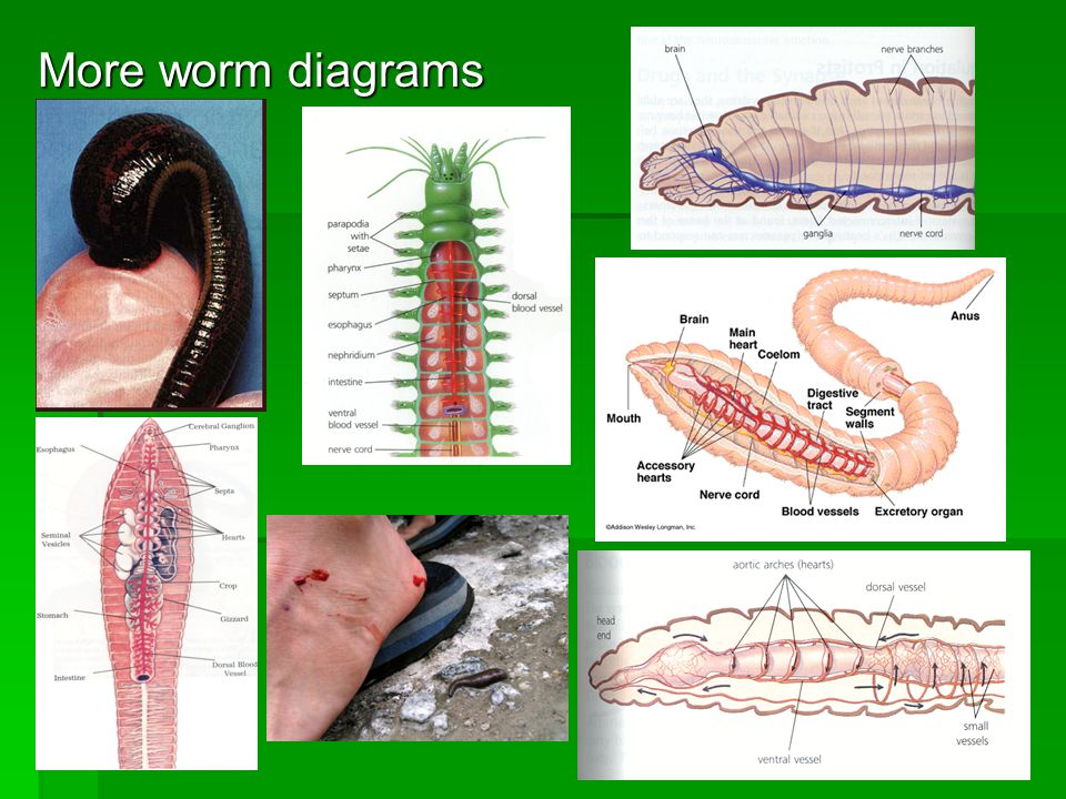 More worm diagrams