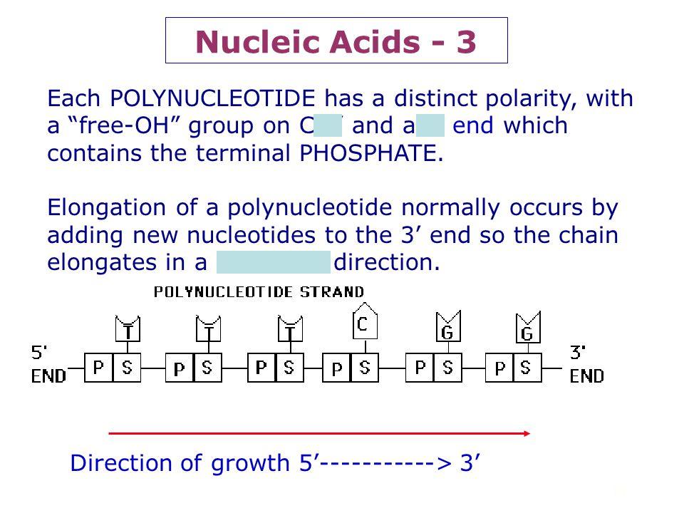 9 Nucleic Acids - 2 Fig. 5.26 Campbell & Reece P P P P Phosphodiester linkage