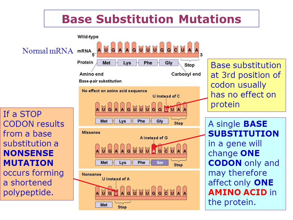 34 Gene (Point) Mutations According to the ONE GENE ONE PROTEIN THEORY for each PROTEIN in the body there is a GENE which controls it. There is theref