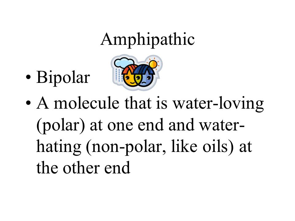 Amphipathic Bipolar A molecule that is water-loving (polar) at one end and water- hating (non-polar, like oils) at the other end