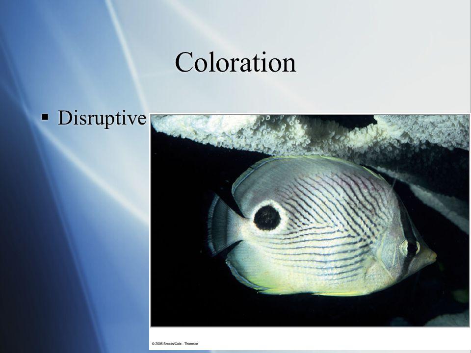Coloration  Disruptive