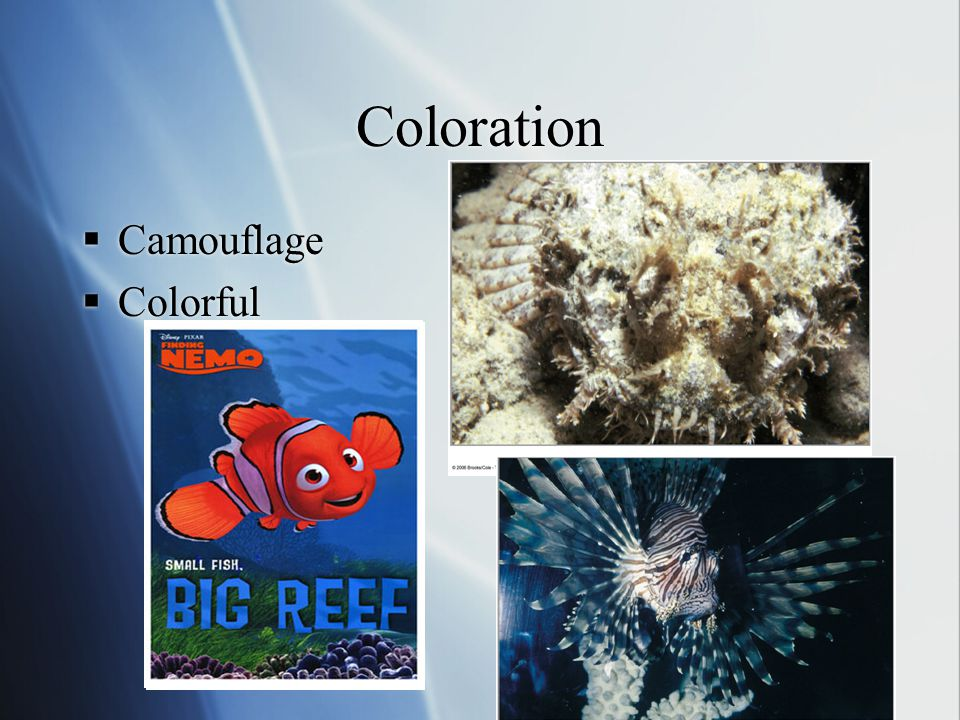 Coloration  Camouflage  Colorful  Camouflage  Colorful