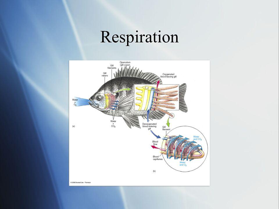 Respiration