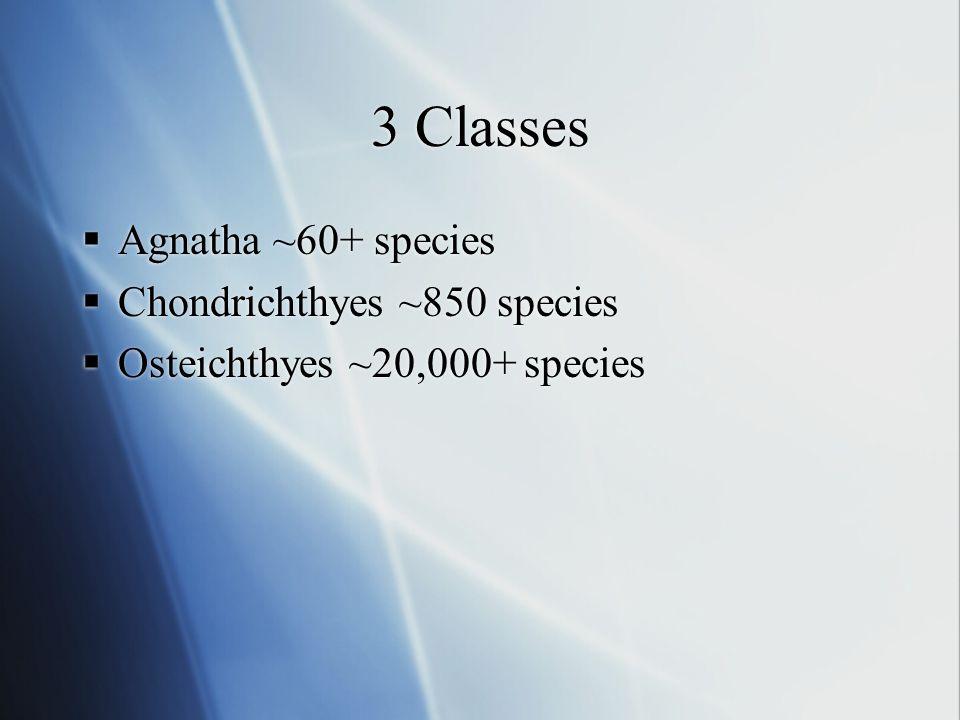 3 Classes  Agnatha ~60+ species  Chondrichthyes ~850 species  Osteichthyes ~20,000+ species  Agnatha ~60+ species  Chondrichthyes ~850 species 