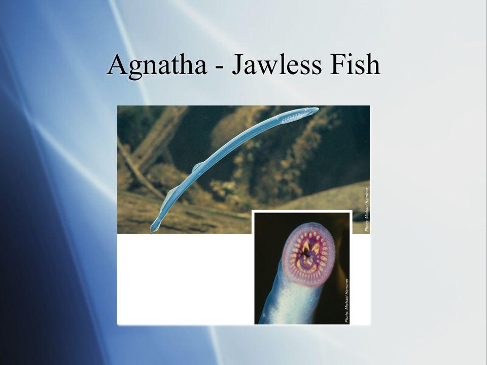 Agnatha - Jawless Fish
