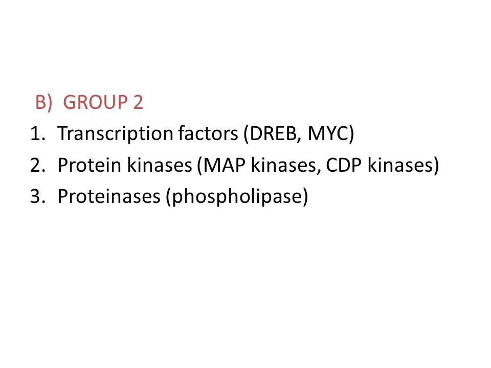 B) GROUP 2 1.Transcription factors (DREB, MYC) 2.Protein kinases (MAP kinases, CDP kinases) 3.Proteinases (phospholipase)