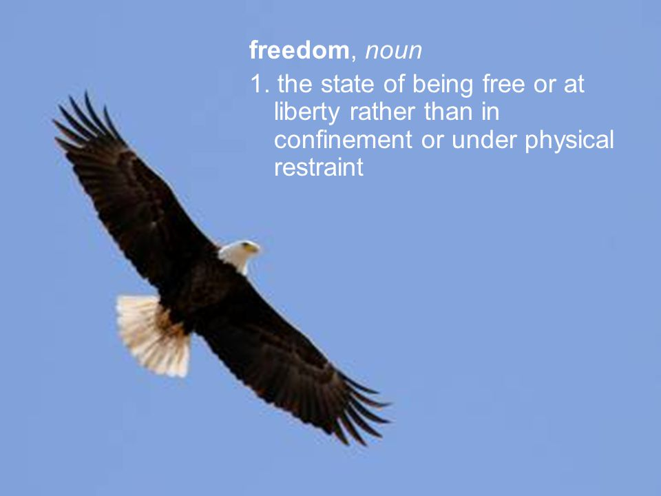 freedom, noun 1. the state of being free or at liberty rather than in confinement or under physical restraint