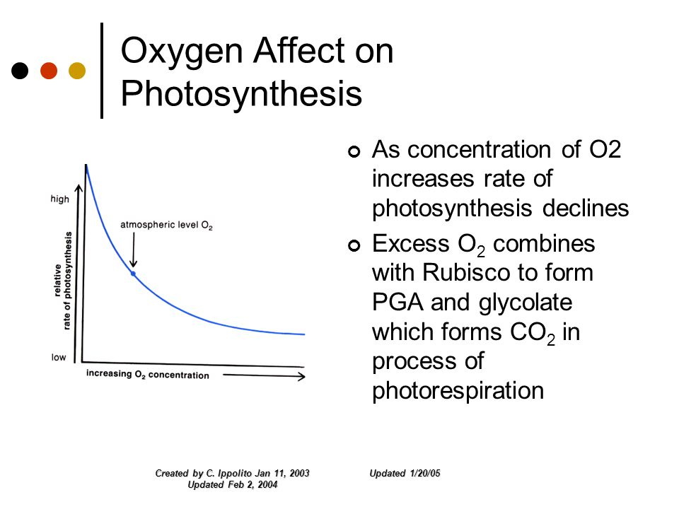 Updated 1/20/05Created by C. Ippolito Jan 11, 2003 Updated Feb 2, 2004 Oxygen Affect on Photosynthesis As concentration of O2 increases rate of photos