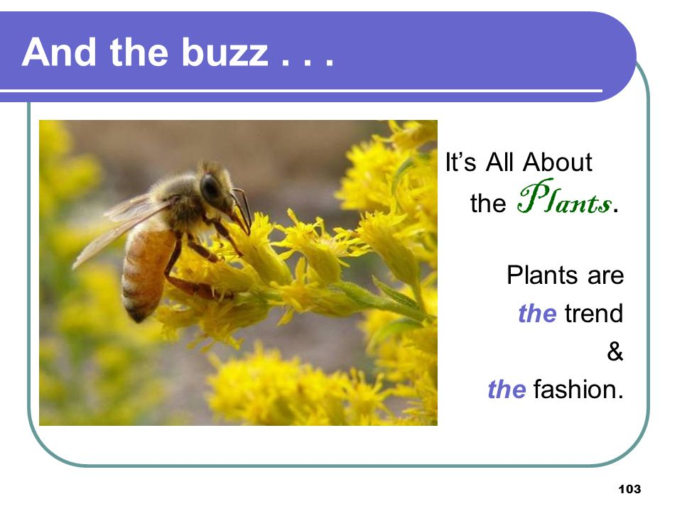 103 And the buzz... It's All About the Plants. Plants are the trend & the fashion.