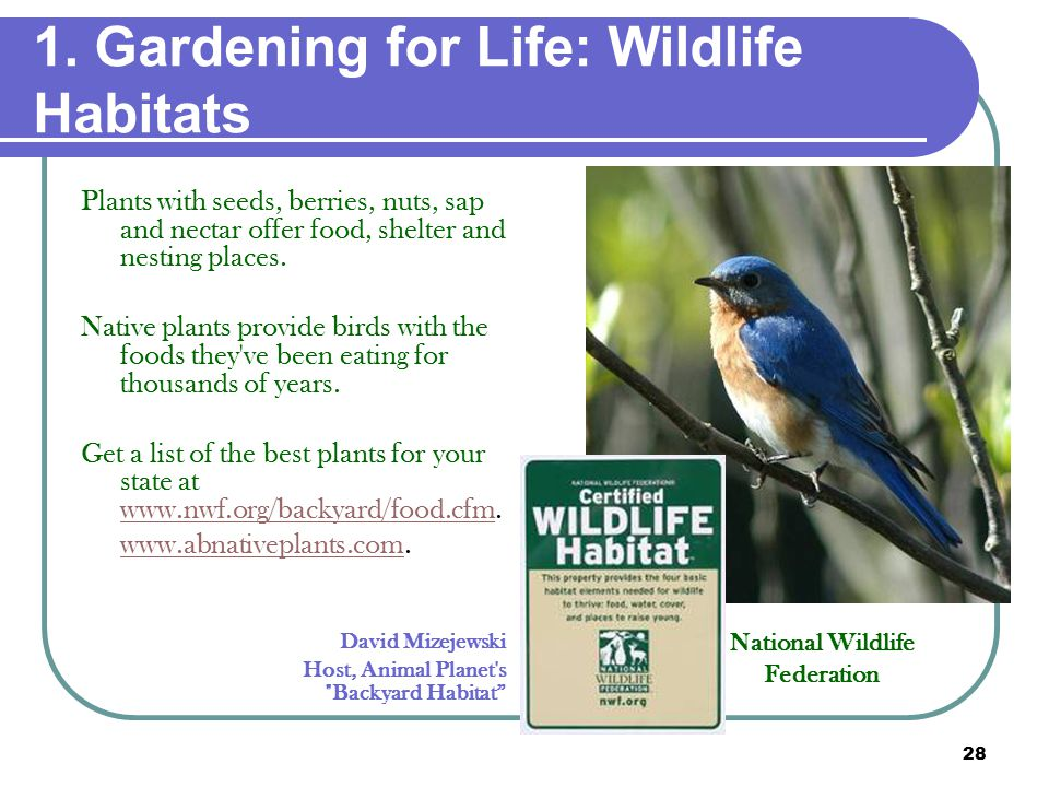 28 1. Gardening for Life: Wildlife Habitats Plants with seeds, berries, nuts, sap and nectar offer food, shelter and nesting places. Native plants pro