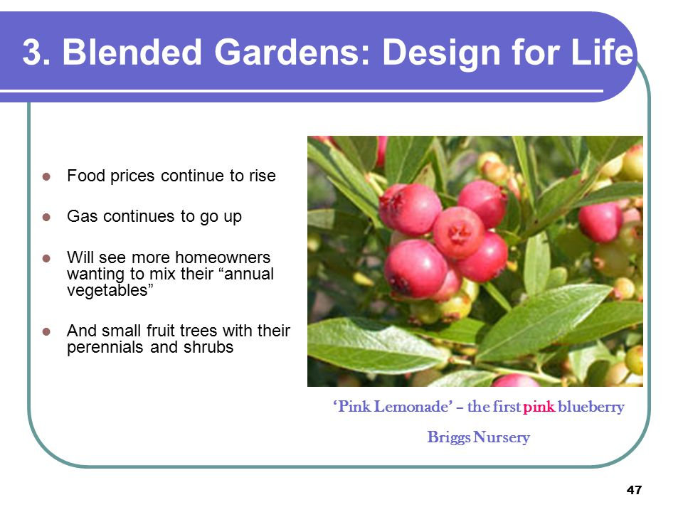 """47 3. Blended Gardens: Design for Life Food prices continue to rise Gas continues to go up Will see more homeowners wanting to mix their """"annual veget"""