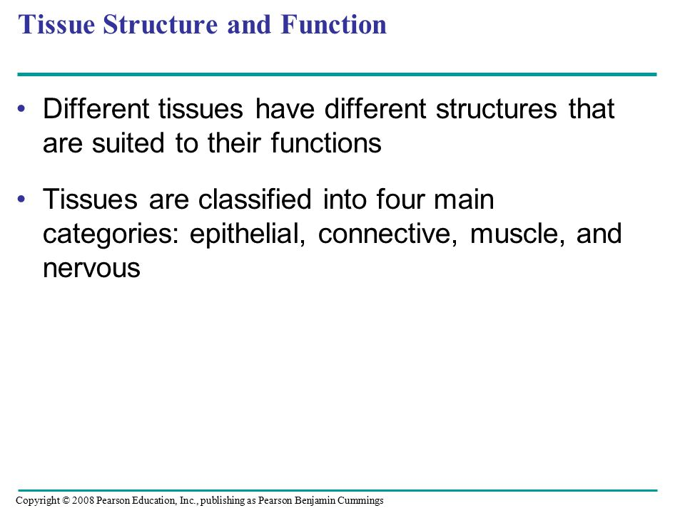 Different tissues have different structures that are suited to their functions Tissues are classified into four main categories: epithelial, connective, muscle, and nervous Tissue Structure and Function Copyright © 2008 Pearson Education, Inc., publishing as Pearson Benjamin Cummings