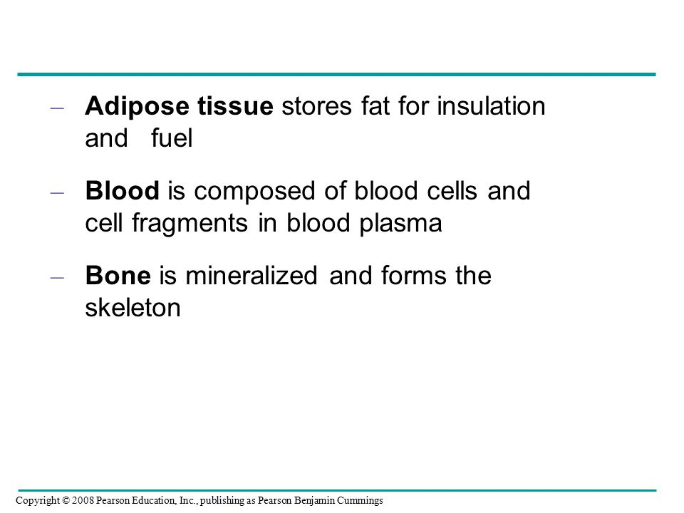 – Adipose tissue stores fat for insulation and fuel – Blood is composed of blood cells and cell fragments in blood plasma – Bone is mineralized and forms the skeleton Copyright © 2008 Pearson Education, Inc., publishing as Pearson Benjamin Cummings