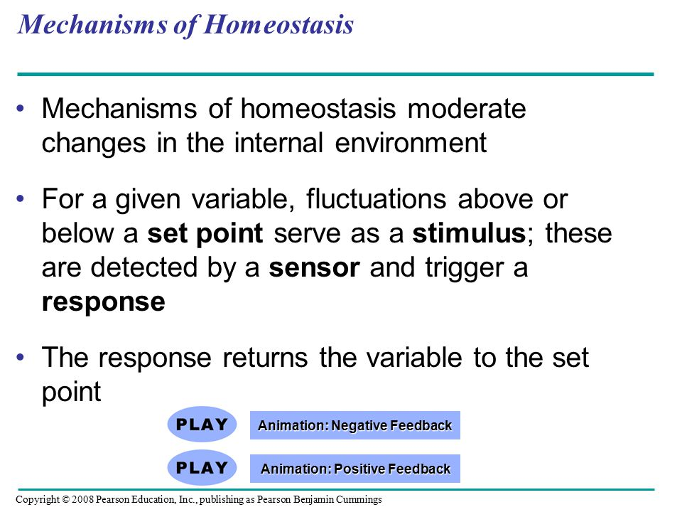 Mechanisms of homeostasis moderate changes in the internal environment For a given variable, fluctuations above or below a set point serve as a stimulus; these are detected by a sensor and trigger a response The response returns the variable to the set point Mechanisms of Homeostasis Copyright © 2008 Pearson Education, Inc., publishing as Pearson Benjamin Cummings Animation: Positive Feedback Animation: Positive Feedback Animation: Negative Feedback Animation: Negative Feedback