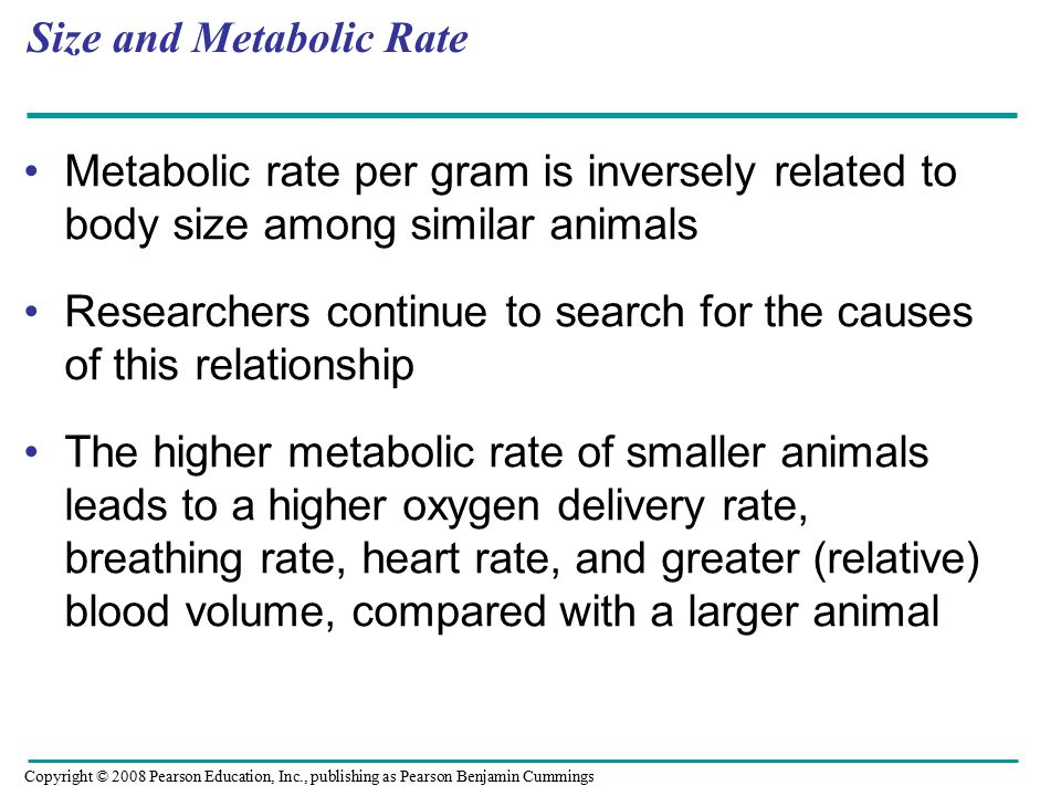 Size and Metabolic Rate Metabolic rate per gram is inversely related to body size among similar animals Researchers continue to search for the causes of this relationship The higher metabolic rate of smaller animals leads to a higher oxygen delivery rate, breathing rate, heart rate, and greater (relative) blood volume, compared with a larger animal Copyright © 2008 Pearson Education, Inc., publishing as Pearson Benjamin Cummings