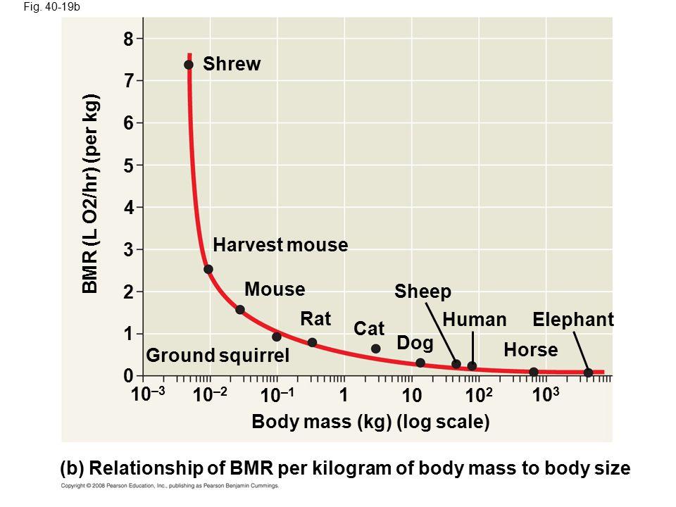Fig. 40-19b 10 3 10 2 10 1 10 –1 10 –2 10 –3 0 1 2 3 4 5 6 7 8 Body mass (kg) (log scale) (b) Relationship of BMR per kilogram of body mass to body si