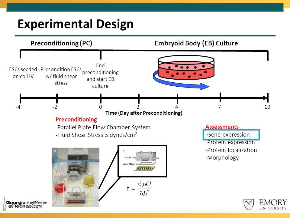 Experimental Design Preconditioning (PC)Embryoid Body (EB) Culture ESCs seeded on coll IV -4 Precondition ESCs w/ fluid shear stress -2 End preconditi