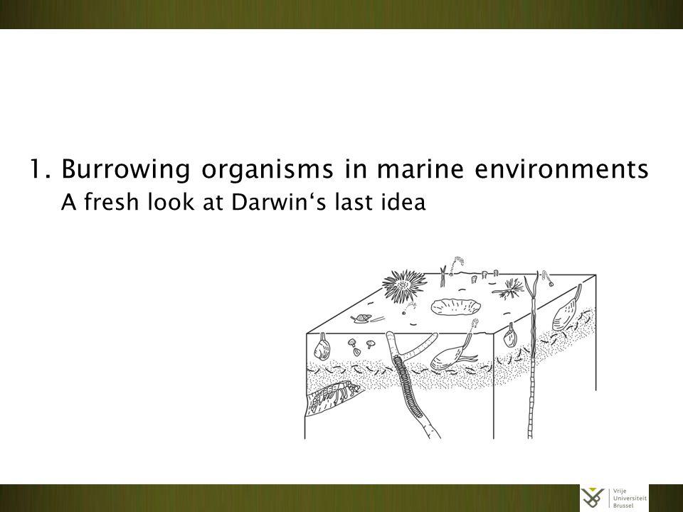 1. Burrowing organisms in marine environments A fresh look at Darwin's last idea