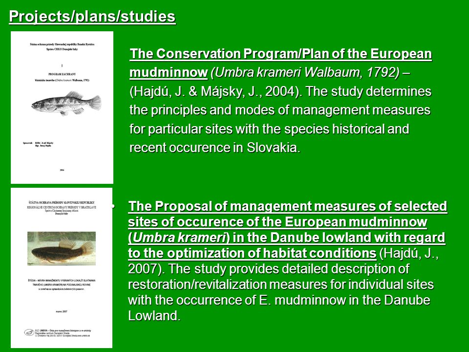Projects/plans/studies The Conservation Program/Plan of the European mudminnow (Umbra krameri Walbaum, 1792) – (Hajdú, J.