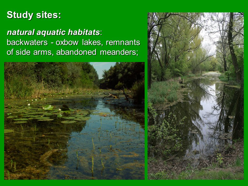 Restoration/renaturation measures creating of new replacement habitats/microhabitats – excavation of small ponds (50 –100m 2 ), depth about 1 to 1.2 m, at convenient sites,