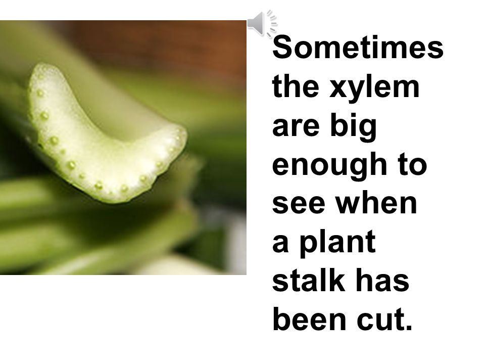 Xylem are the tubes that carry water and minerals from the roots up the stem to the leaves.