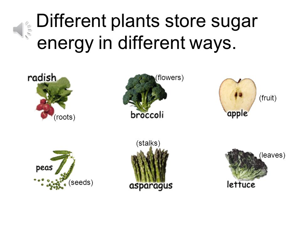 The phloem tubes transport the sugar made in the leaves to every part of the plant for growth and storage.