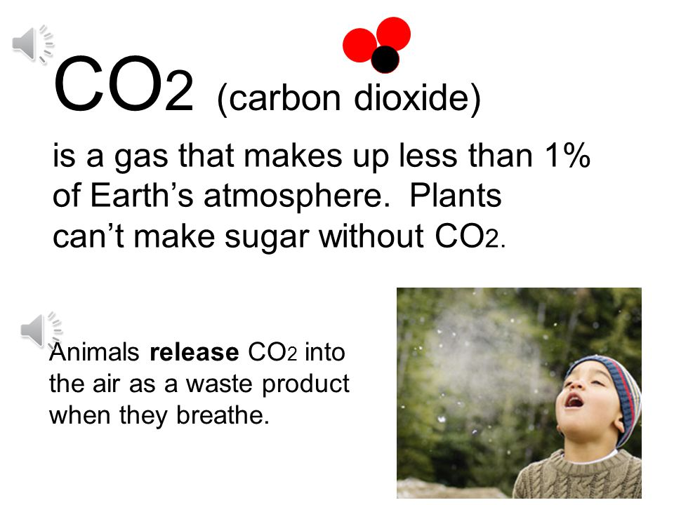 In order to make food plants must have: light water CO 2 (Carbon dioxide)