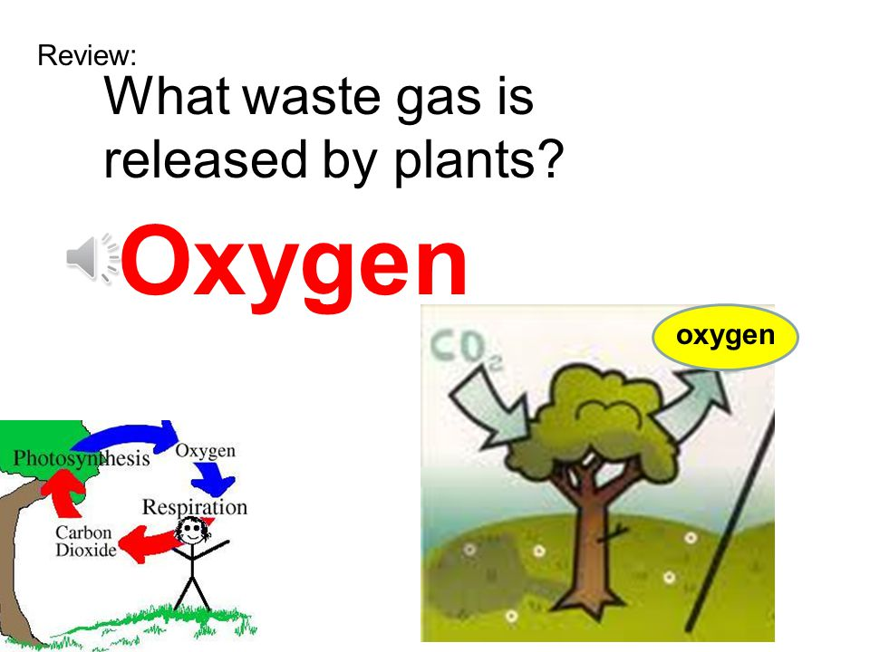 Review: What waste gas is released by plants