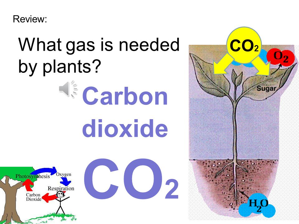 Review: What gas is needed by plants