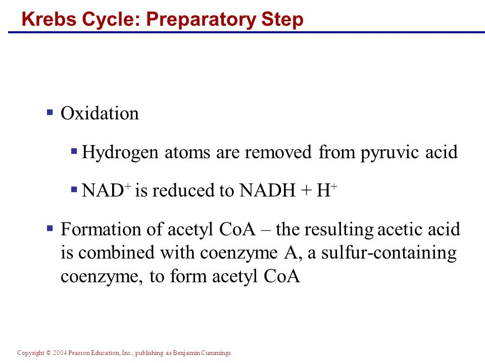 Copyright © 2004 Pearson Education, Inc., publishing as Benjamin Cummings Krebs Cycle: Preparatory Step  Oxidation  Hydrogen atoms are removed from pyruvic acid  NAD + is reduced to NADH + H +  Formation of acetyl CoA – the resulting acetic acid is combined with coenzyme A, a sulfur-containing coenzyme, to form acetyl CoA