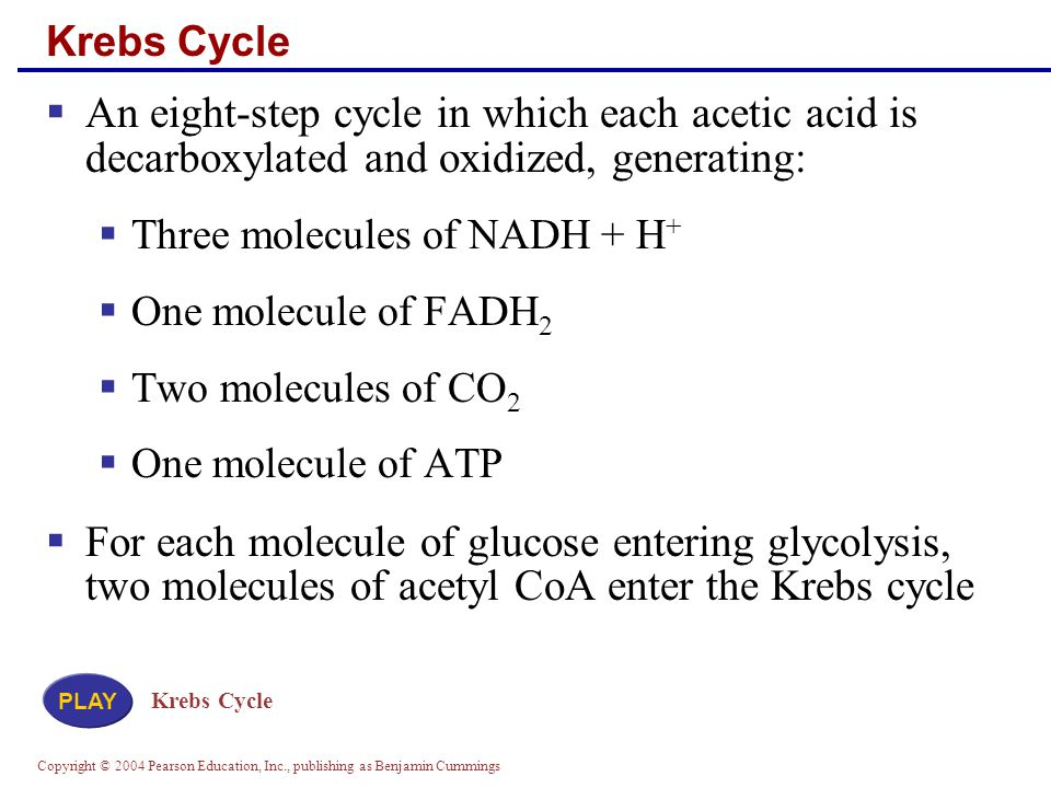 Copyright © 2004 Pearson Education, Inc., publishing as Benjamin Cummings Krebs Cycle  An eight-step cycle in which each acetic acid is decarboxylated and oxidized, generating:  Three molecules of NADH + H +  One molecule of FADH 2  Two molecules of CO 2  One molecule of ATP  For each molecule of glucose entering glycolysis, two molecules of acetyl CoA enter the Krebs cycle Krebs Cycle PLAY