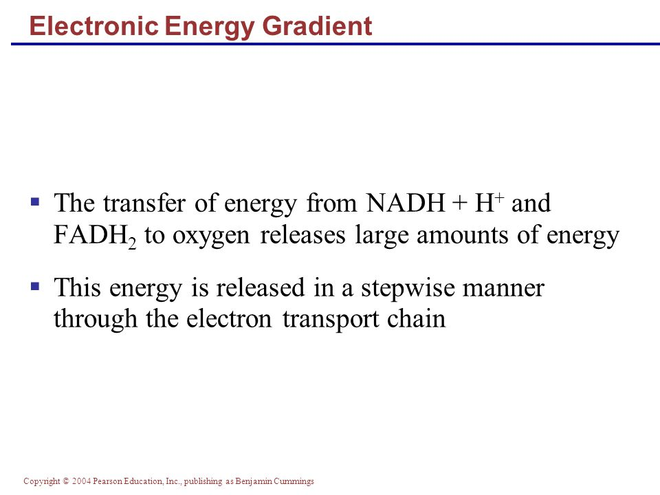 Copyright © 2004 Pearson Education, Inc., publishing as Benjamin Cummings Electronic Energy Gradient  The transfer of energy from NADH + H + and FADH 2 to oxygen releases large amounts of energy  This energy is released in a stepwise manner through the electron transport chain