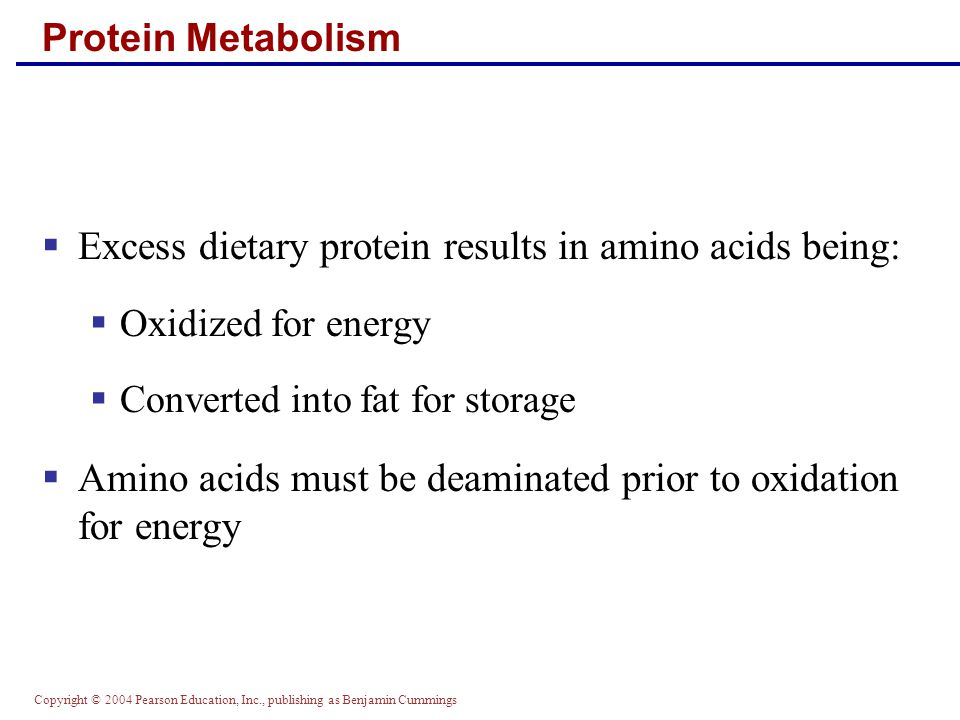 Copyright © 2004 Pearson Education, Inc., publishing as Benjamin Cummings Protein Metabolism  Excess dietary protein results in amino acids being:  Oxidized for energy  Converted into fat for storage  Amino acids must be deaminated prior to oxidation for energy