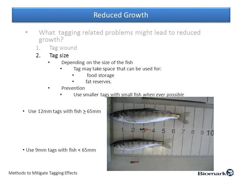 Reduced Growth Methods to Mitigate Tagging Effects What tagging related problems might lead to reduced growth.