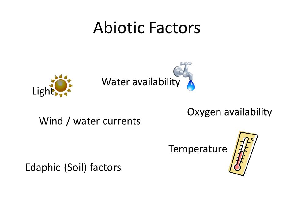 Abiotic Factors Light Wind / water currents Oxygen availability Edaphic (Soil) factors Water availability Temperature