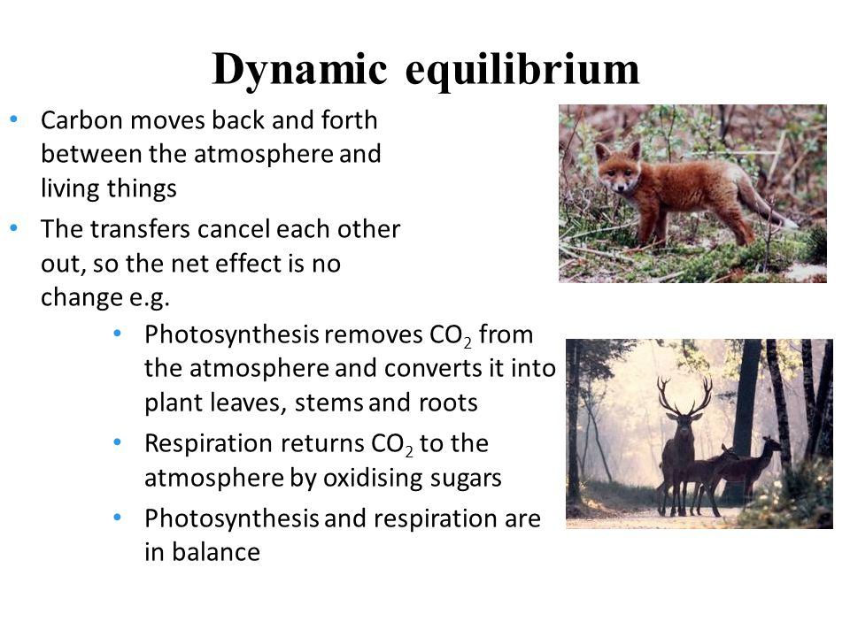 Dynamic equilibrium Carbon moves back and forth between the atmosphere and living things The transfers cancel each other out, so the net effect is no change e.g.