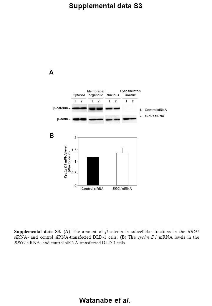 Supplemental data S3 Watanabe et al. A 1. Control siRNA 2.