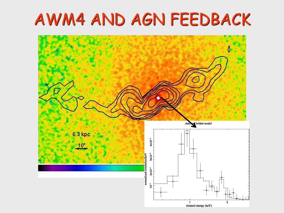 AWM4 AND AGN FEEDBACK