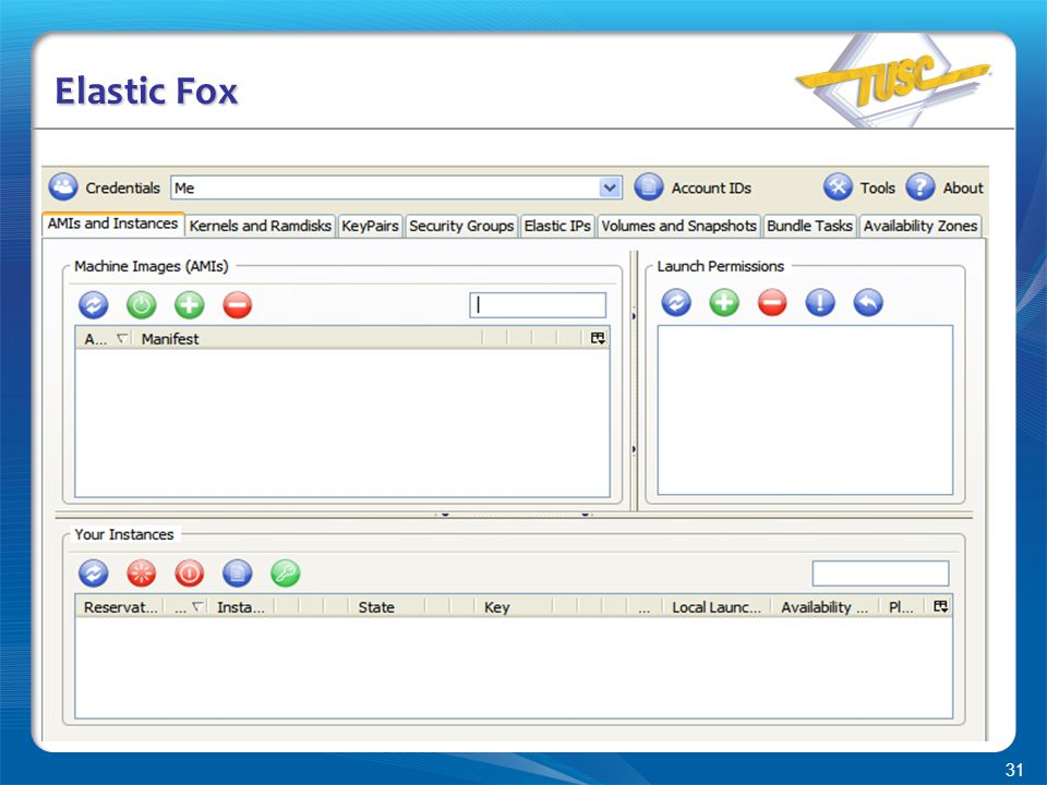 31 Elastic Fox