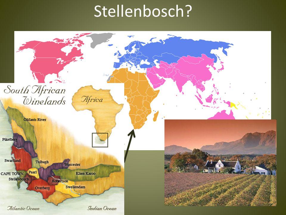 Stellenbosch?