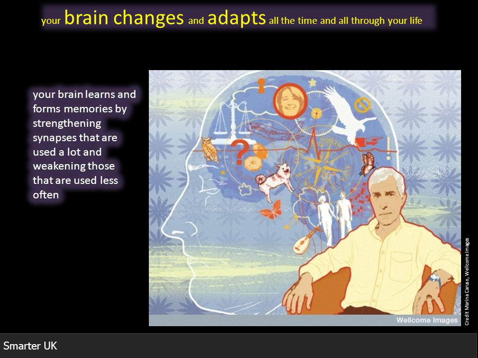 Smarter UK Credit Marina Caruso, Wellcome Images your brain changes and adapts all the time and all through your life
