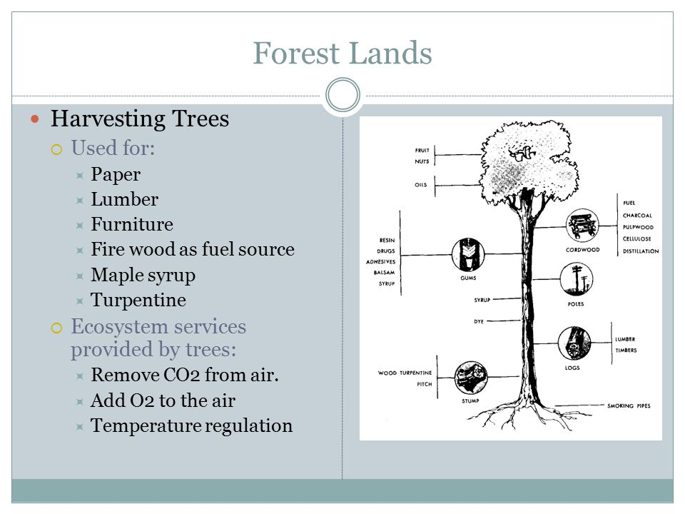 Forest Lands Harvesting Trees  Used for:  Paper  Lumber  Furniture  Fire wood as fuel source  Maple syrup  Turpentine  Ecosystem services provided by trees:  Remove CO2 from air.